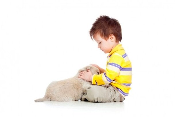 Pets can help improve social skills of kids with Autism