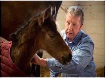 Dr John Madigan Inspecting a Foal