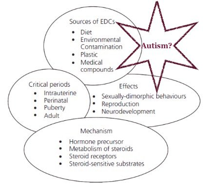could endocrine disruptors be linked to Autism as well