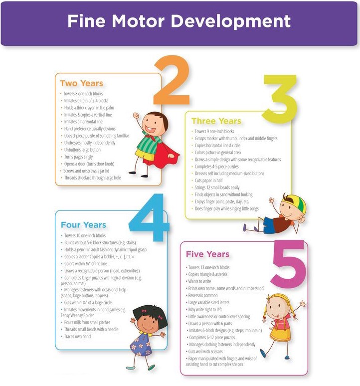 Fine Motor Skills Developmental Stages