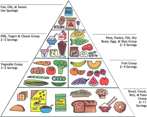 Food Pyramid - A Balanced diet for Autism